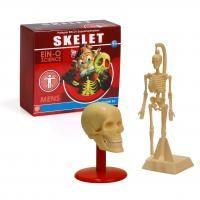 blijfwijs-skelet
