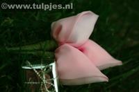 tulpjesroze