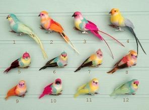 12 soorten vogels petra boase