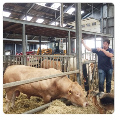 boer jan vertelt over stieren