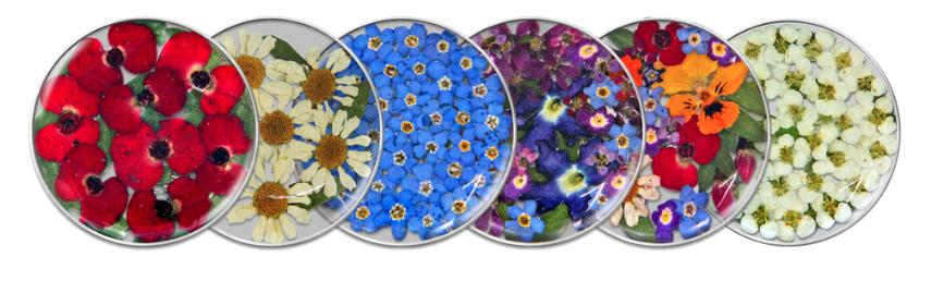flora insignia's