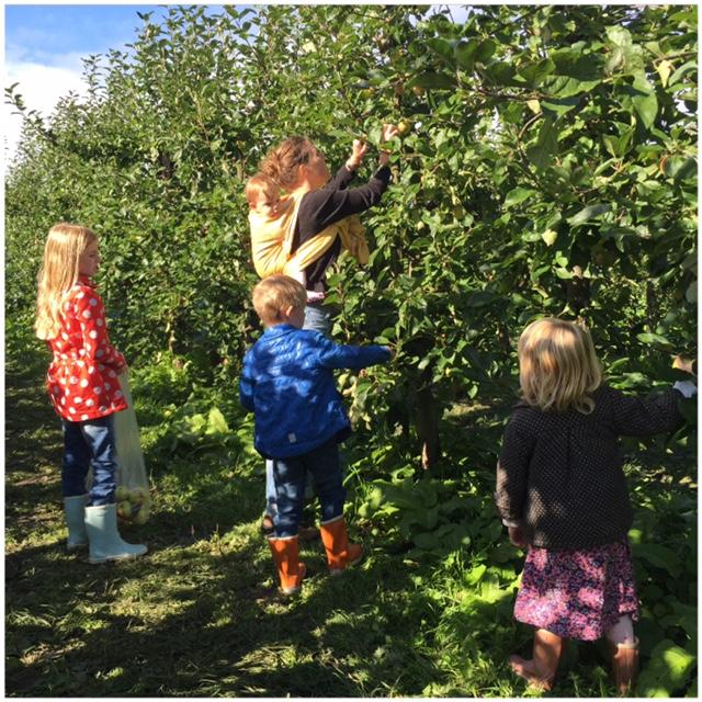 appels plukken in de boomgaard