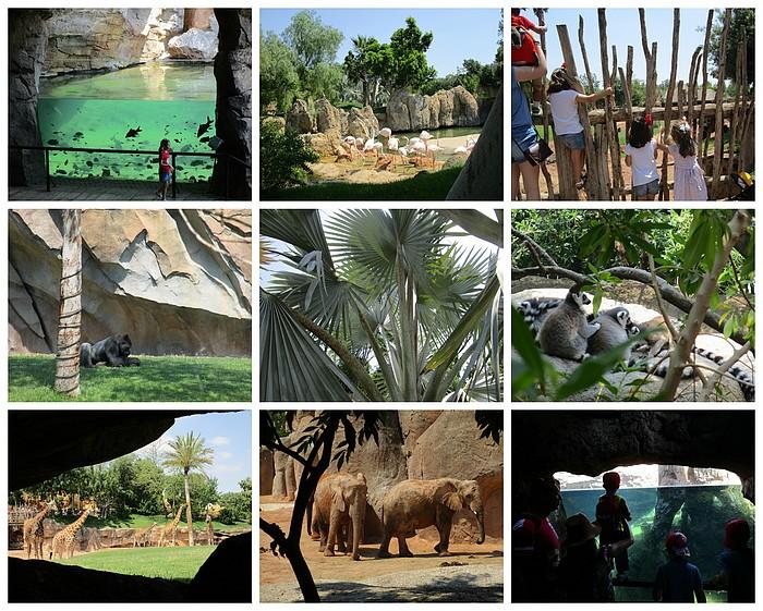 Valencia Bioparc foto Denise Miltenburg H&H