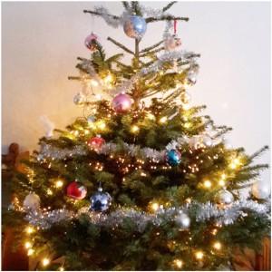 kerstboom goed houden