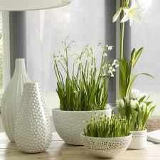 Botanisch met wit