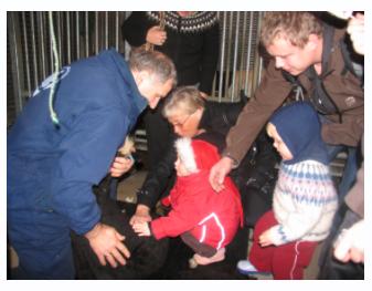 kinderboerderij ijsland