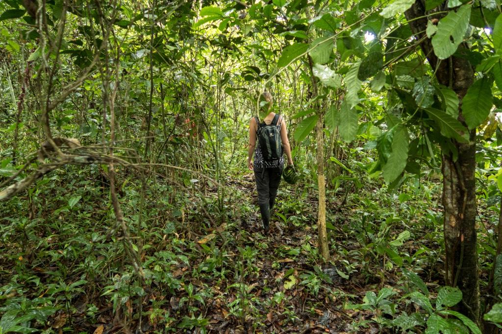 De stilte van de jungle