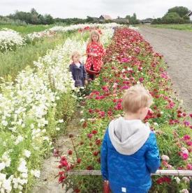 Hof Hazenberg bloemen plukken