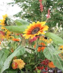 Tuin bij de Wildernis