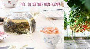 thee-en-pluktuinen-Noord-Holland