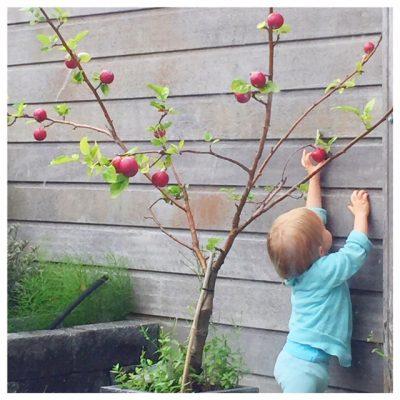 appeltje pikken