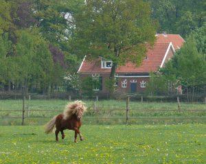 horse-1186204_1280