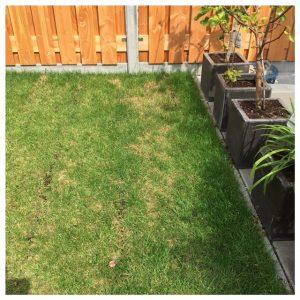 Kies je kunstgras of echt gras