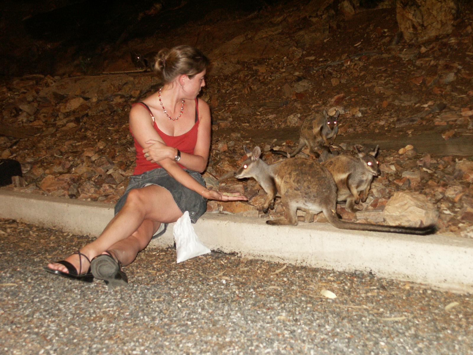 wallaby uit je hand eten
