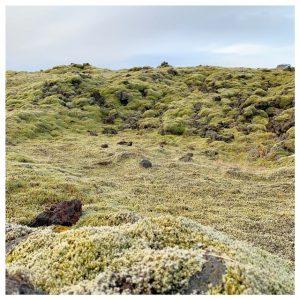 boslandschap ijsland