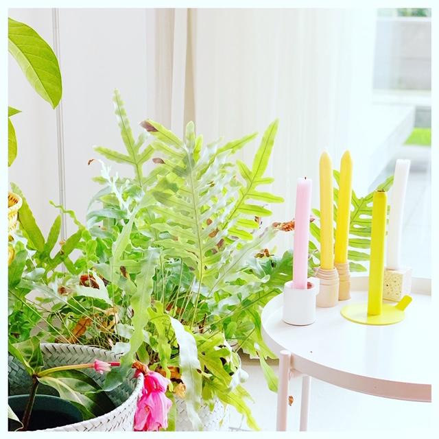 planten huis