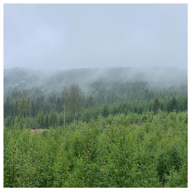 mist en bos