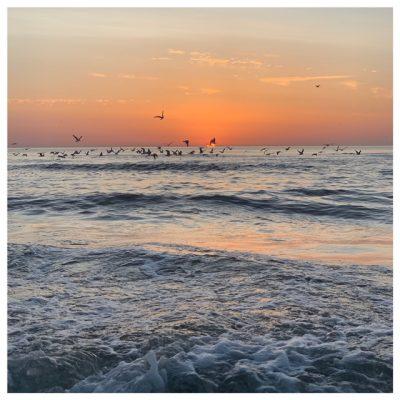 sunset vogels