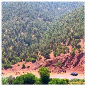 ourika valley kamelen