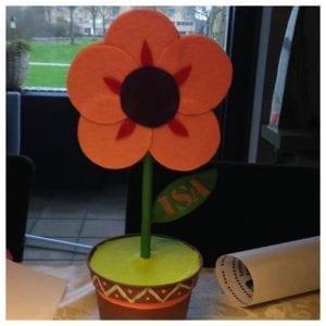 surprise bloem