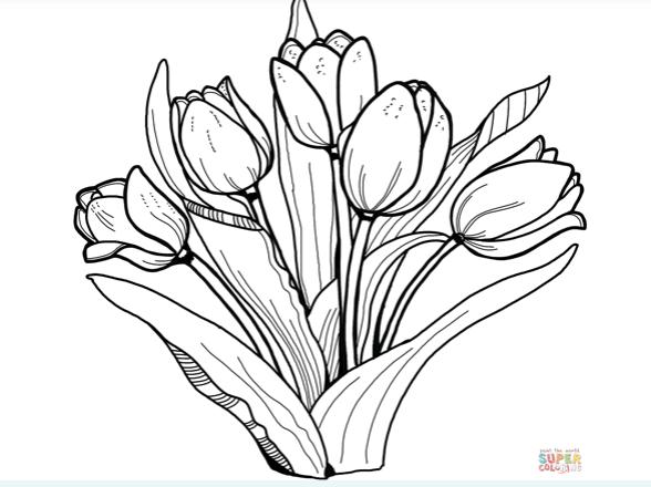 kleurplaat tulpen