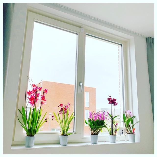 orchideen raam slaapkamer