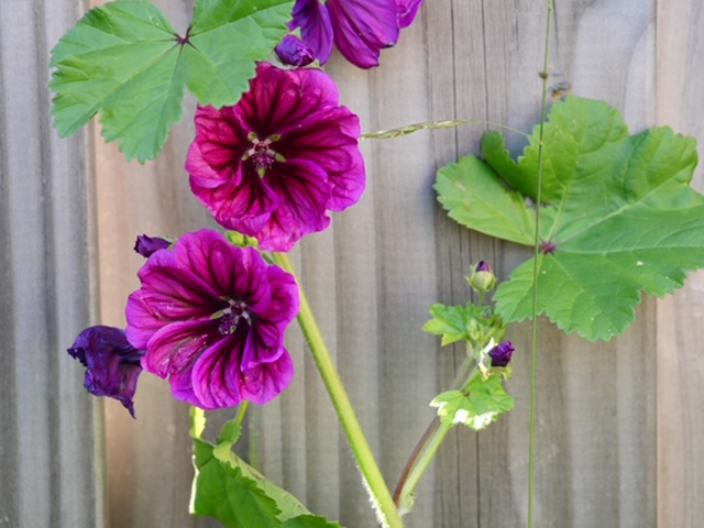 bloem paars tuin