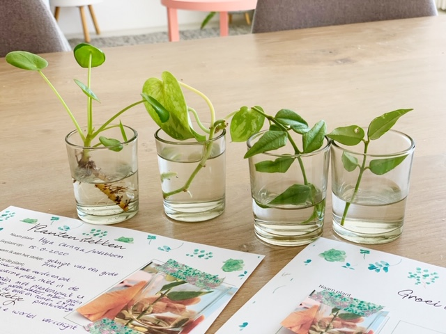 free printable over plantjes stekken vaasjes met stekjes