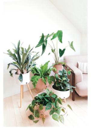 handed by plantenstandaard roze