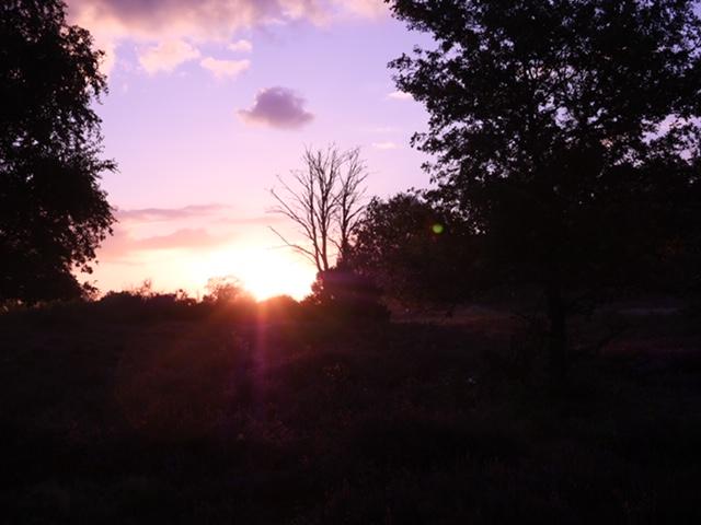 sunrise heidepaars
