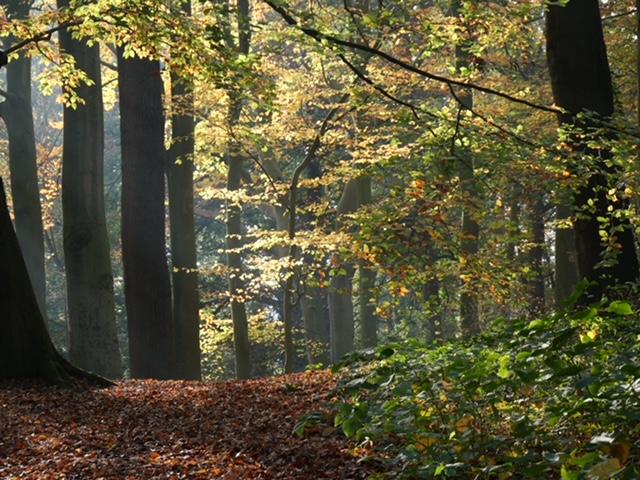 bos herfst licht