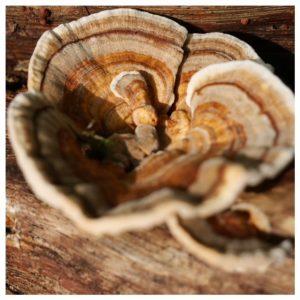 paddenstoel aan boomstam