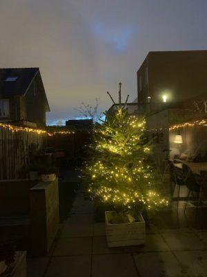 kerstboom in de tuin