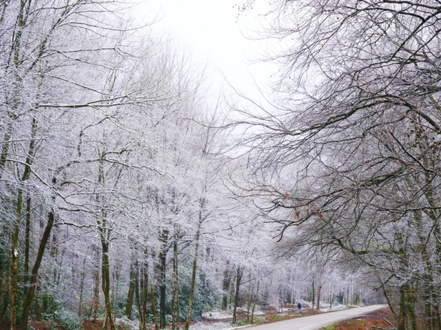 bossen wit limburg sneeuw