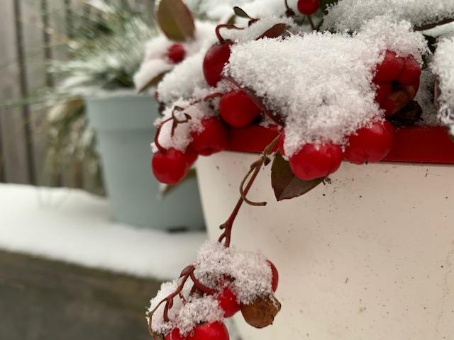 bergthee met sneeuw
