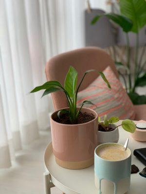pumpkin chai latte feb 2021