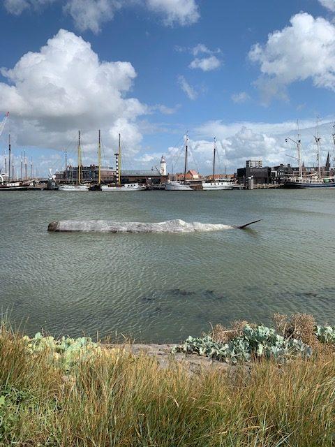 Walvis fontein harlingen